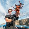 California Spiny Lobster:  phylum Arthropod - subphylum Crustacean - class Malacostraca; Anacapa Island, CA