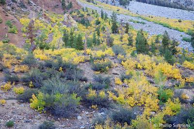 Bishop Creek hillside