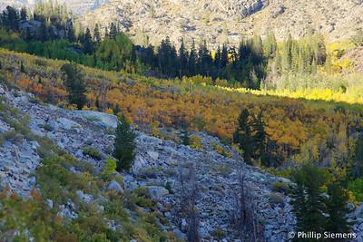 Aspen grove along Bishop Creek just above Aspendell