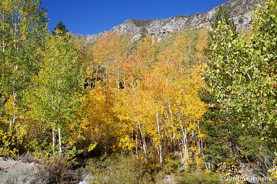 Bishop Creek just below Lake Sabrina