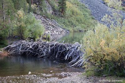 Beaver dam, Lundy Lake