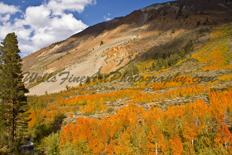 Aspen hillside near S. Lake Road