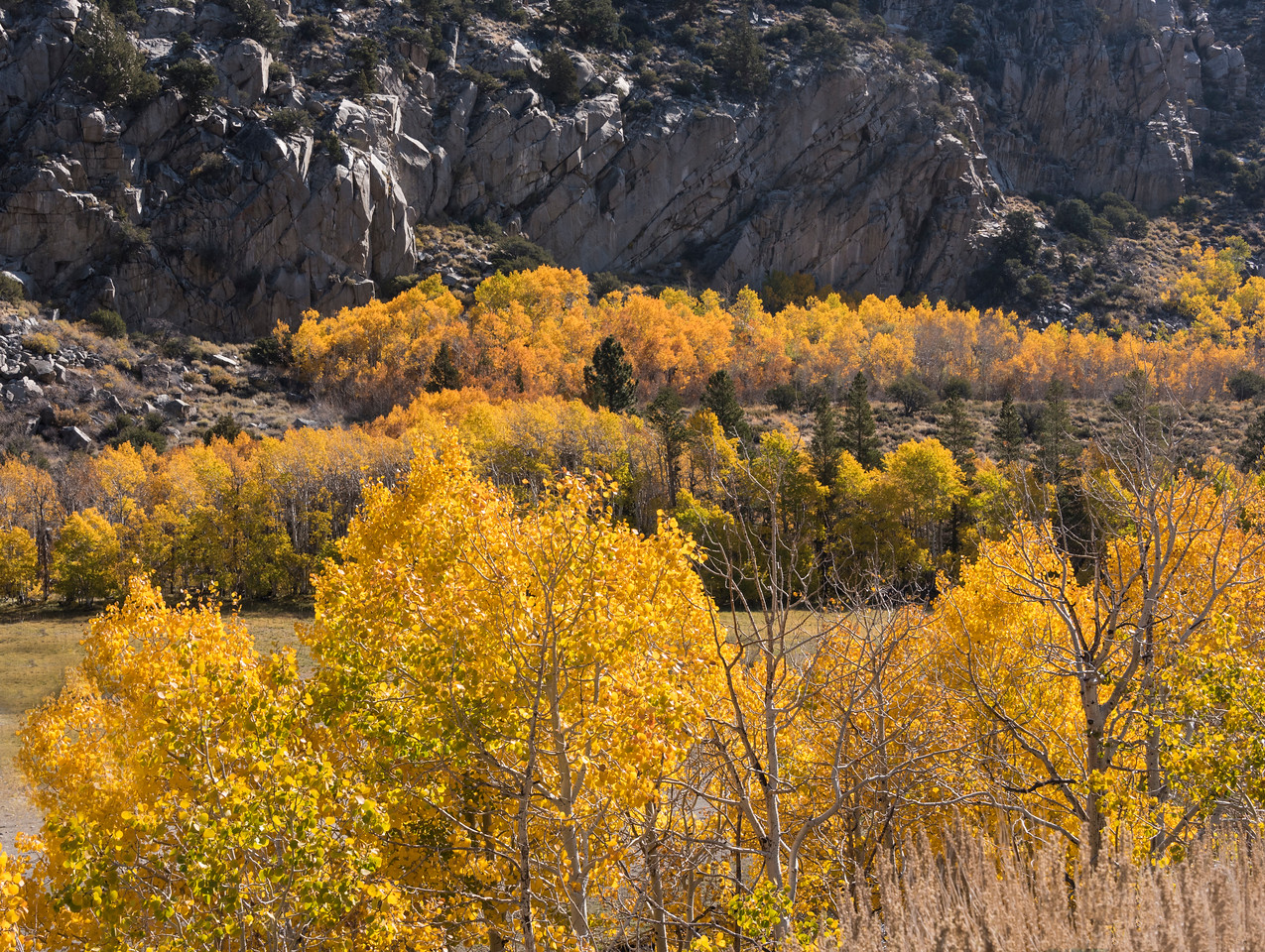 032-YellowAspens-SRA_1976