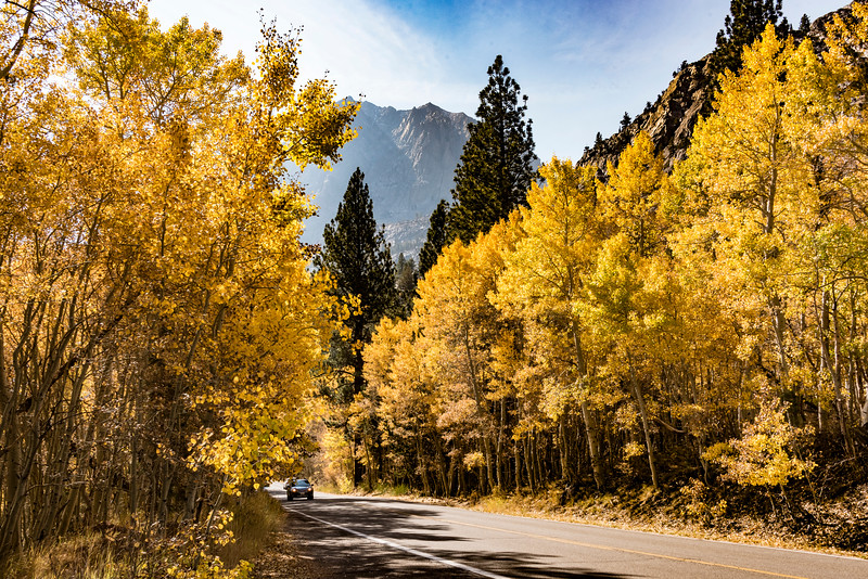 035-YellowAspens-Road-JuneLake-SRA_1996
