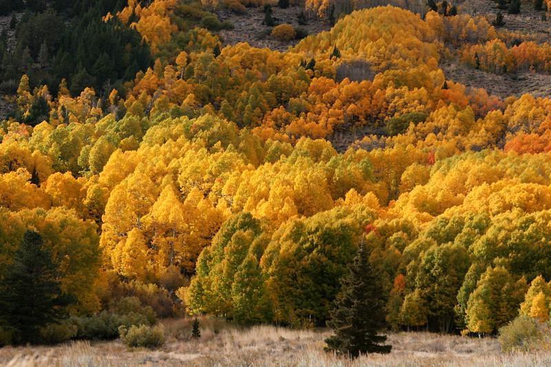 June Lake Loop, Eastern Sierra Nevada Mountains, California