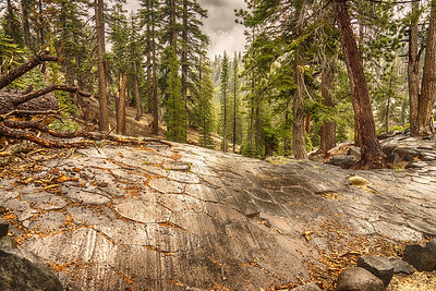 Devil's Postpile, Tops of  Basalt Columns