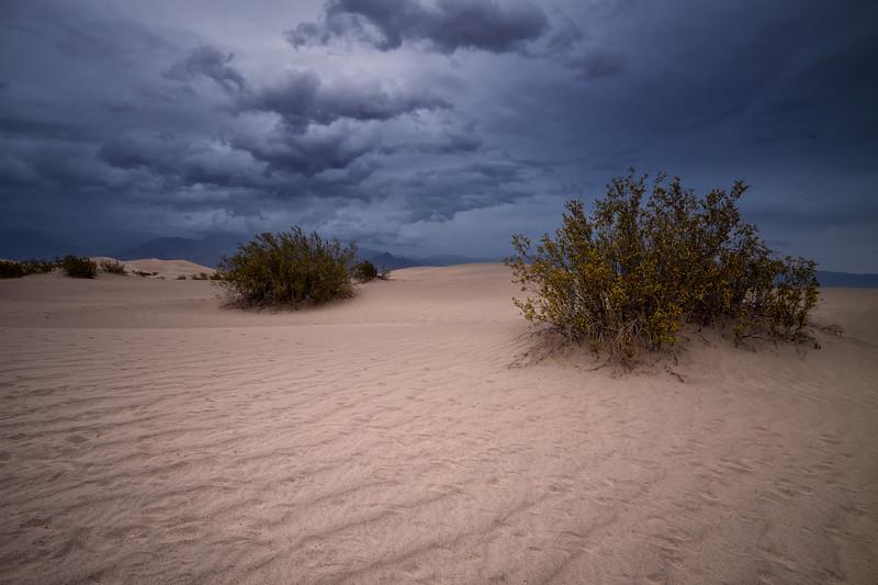Mesquite Flats Sand Dunes One