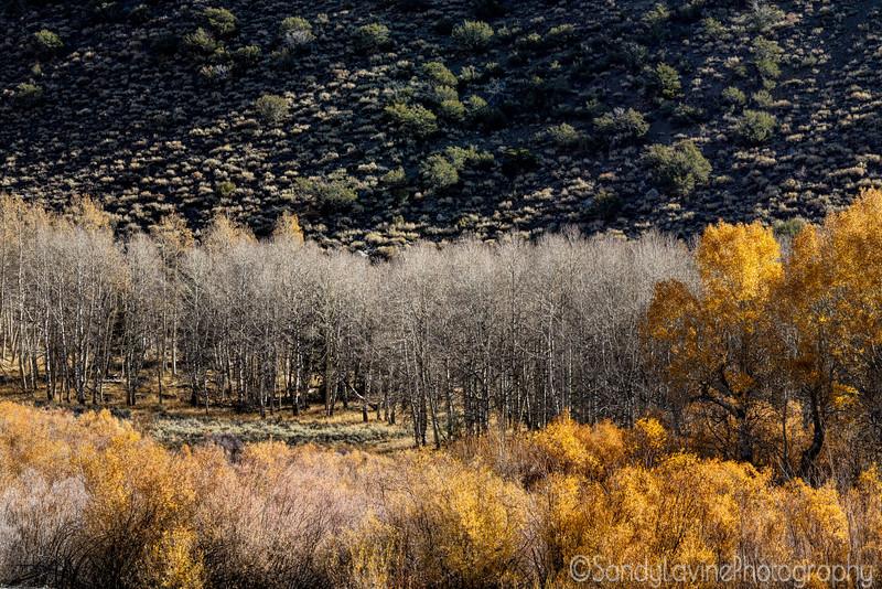 Silver Lake Fall Foliage