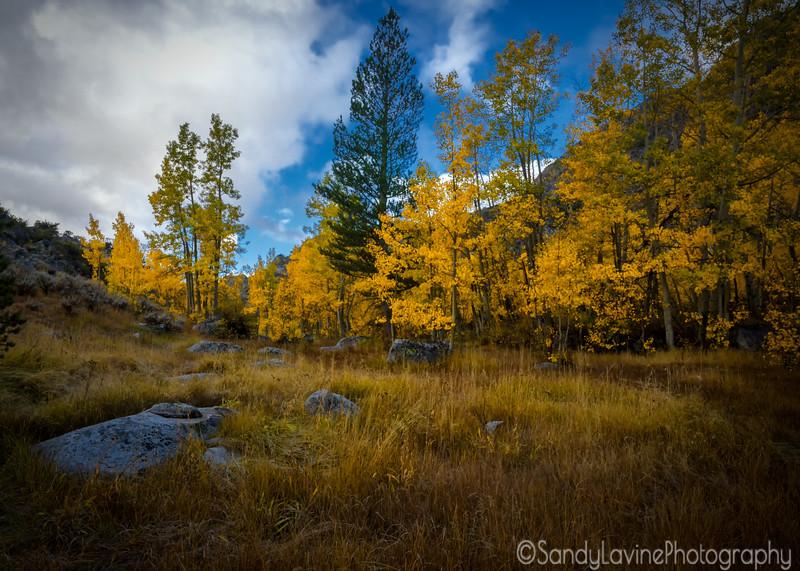 Sierra Meadow Early Morning