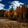 Carson Pass Foliage