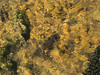 Brown trout during fall spawning run in the eastern Sierra.<br /> #73<br /> Nov. 7, 2006