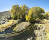 Many small Owens River tributaries are riparian strips of green crossing sagebrush terrain. Willows and cottonwoods provide shade. The stream bottom substrate consists of gravels, weedbeds and undercut banks. When I approached this stream, dark forms streaked to the undercuts. After considerable patience and stillness on my part, the trout felt safe to return.<br /> <br /> Most of the rest of these images are telephoto shots from the same position as this wide angle shot.<br /> <br /> The last two images mark where the fish are in the other images and where in the next wide angle view the other fish pictures are.<br /> <br /> Owens Valley<br /> Nov. 7, 2006