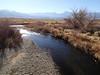 Lower Owens-Bishop Special Regs Waters<br /> 20-To_5_Bridges_Road<br /> 37.41163 -118.39545<br /> Owens River above bridge