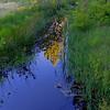 Folsom Spring creek, Nevada Beach, Lake Tahoe