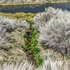 071 Hot Creek Trout Hatchery, Mono County, California