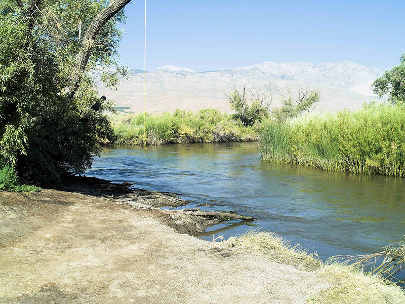 2006-07-11<br /> In this picture the original swing branch is gone and the rope has been placed on the next higher branch. The water is still high.