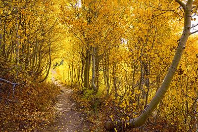 Fall Colors, Heart Lake Trail