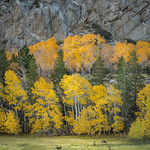 Eastern Sierra Fall