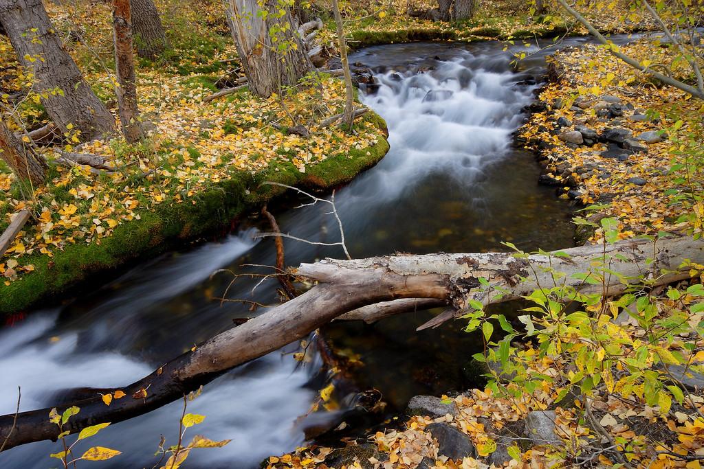 McGee Creek, Fall Colors Mono County California