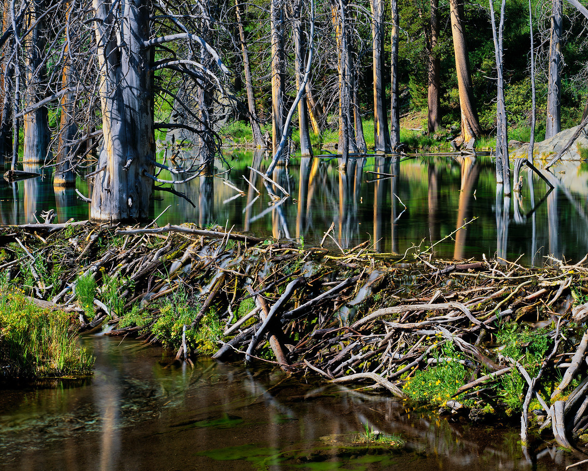 """Beaver Dam"""