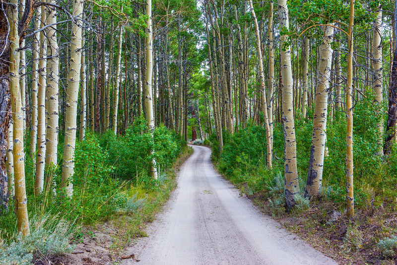 """Drive Through the Aspens"""
