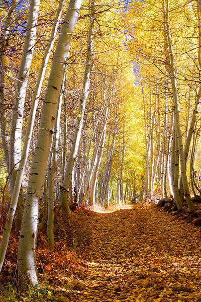 Aspen Pathway