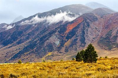 Fall Colors near Mammoth Creek 2