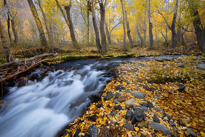 The Nature Conservancy 2008 Photography Contest - Honorable Mention McGee Creek, Fall Colors Mono County California