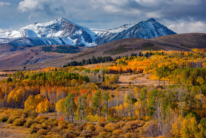 """Conway Summit Aspens"""