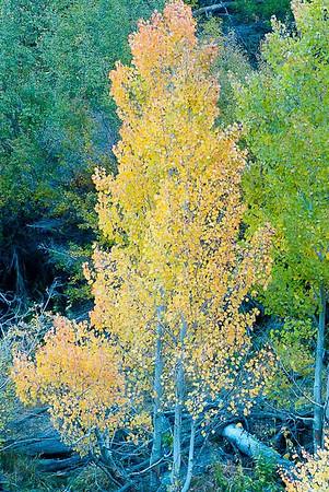 101013_South Fork Bishop Creek Canyon_068