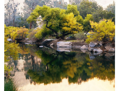 Kern River foliage