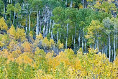 101013_South Fork Bishop Creek Canyon_054