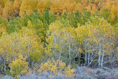 101013_South Fork Bishop Creek Canyon_046