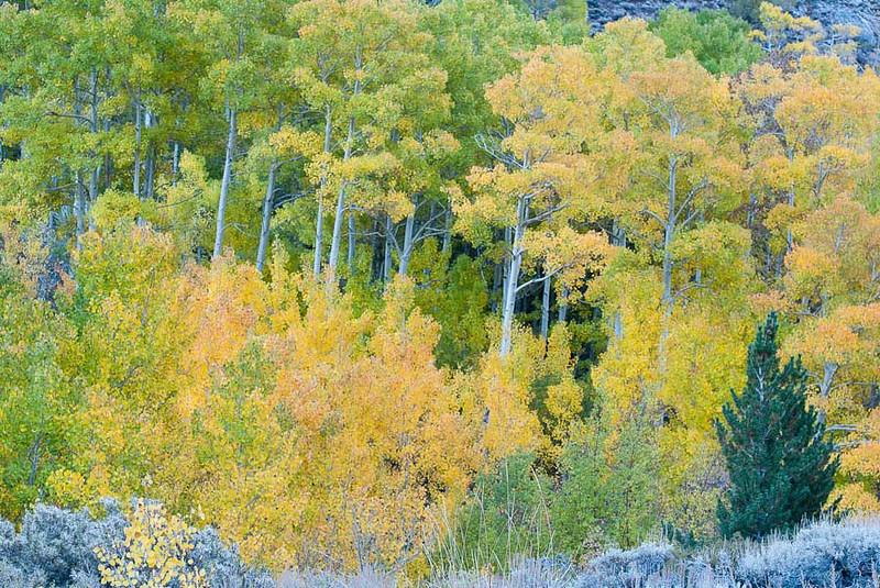 101013_South Fork Bishop Creek Canyon_060