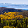 Mono Lake and Aspens