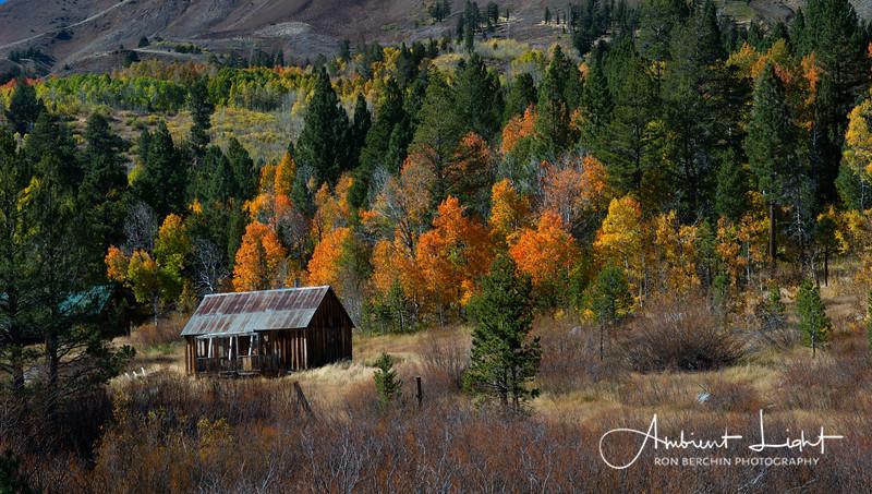 Fall Color in Eastern Sierras