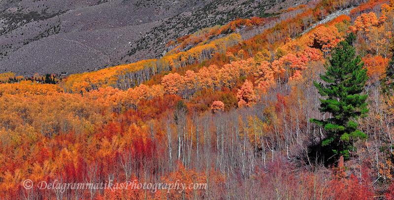 20111022_Eastern Sierras_2770
