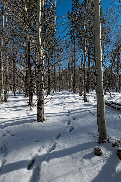 Snowy path through the trees