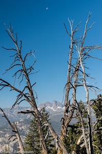 The Minarets, framed by trees, from near Devil's Postpile.