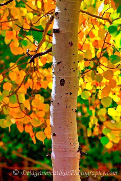 20111009_Eastern Sierras_2611