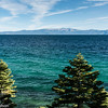 Two trees on the shore of Lake Tahoe.