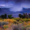 20111006_Eastern Sierras_1590