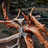 20110612_Eastern Sierras_0811