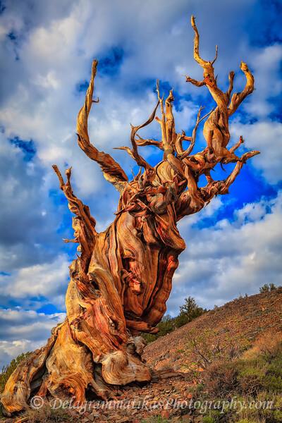 20110612_Eastern Sierras_0863