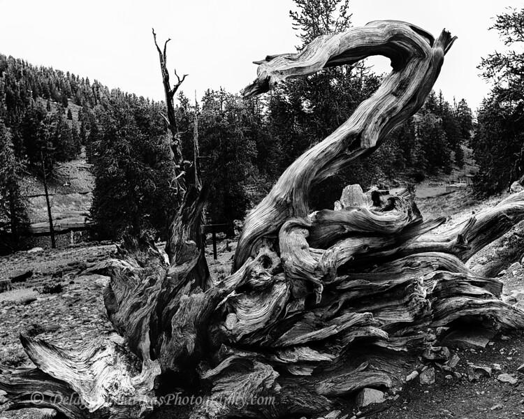 20110612_Eastern Sierras_0805_BW