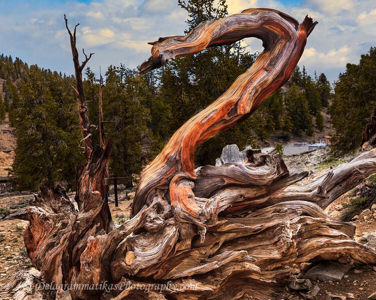 20110612_Eastern Sierras_0805