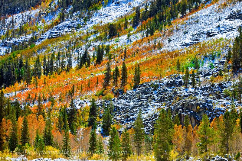 20111007_Eastern Sierras_1623