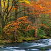 Fall Colors along the Middle Prong Little River