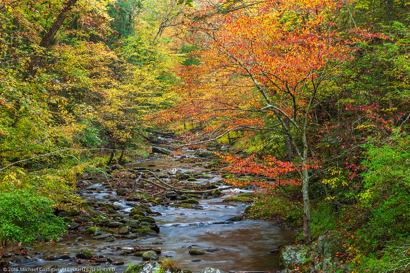 Great Smoky Mountains NP_20151026_0345.jpg