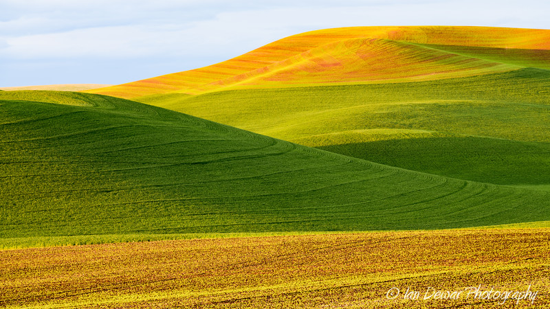 Palouse Curves